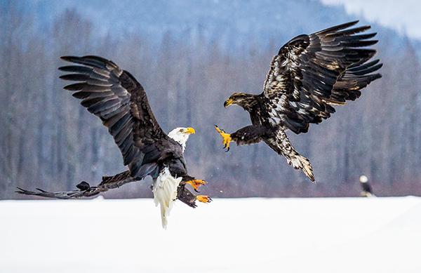 Eagle Gopro