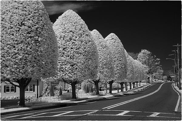 There are two major challenges to successful digital infrared photography even for those who use ir modified cameras setting the correct white balance is