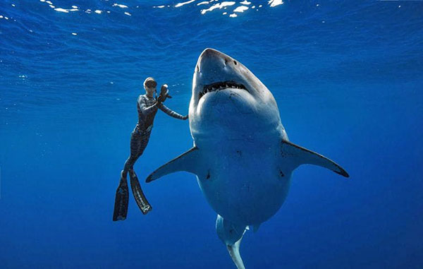 Watch This Underwater Photographer Swim with One of the Largest Sharks Ever Recorded