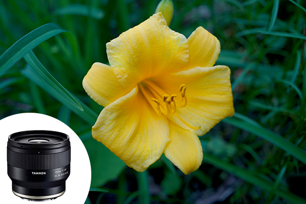 5 Quality Inexpensive Lenses for Photographers on a Budget