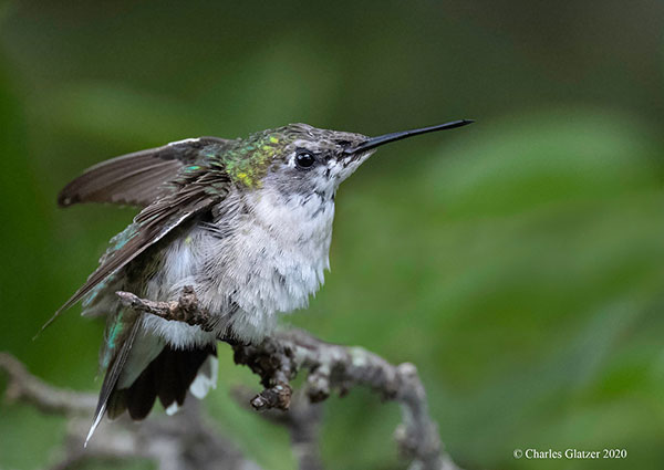 5 Home Photography Tips: How to Capture Beautiful Backyard Bird Photos & Other Local Wildlife