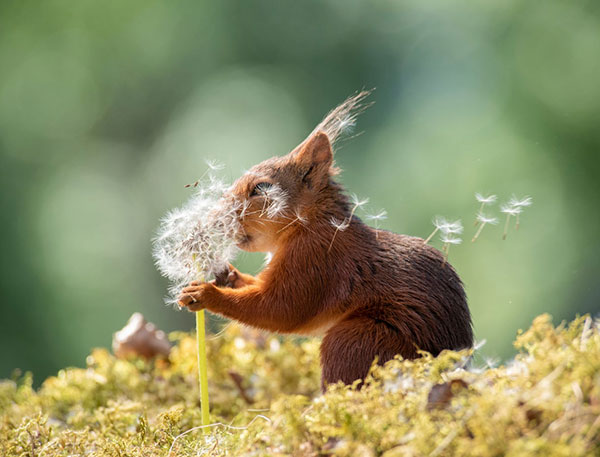 Here Are 10 Hilarious Finalists from the 2019 Comedy Wildlife Photo Awards