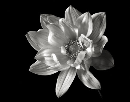 Black and white flower portraiture shutterbug careful dodging and burning helps create the illusion of depth and even movement mightylinksfo Image collections