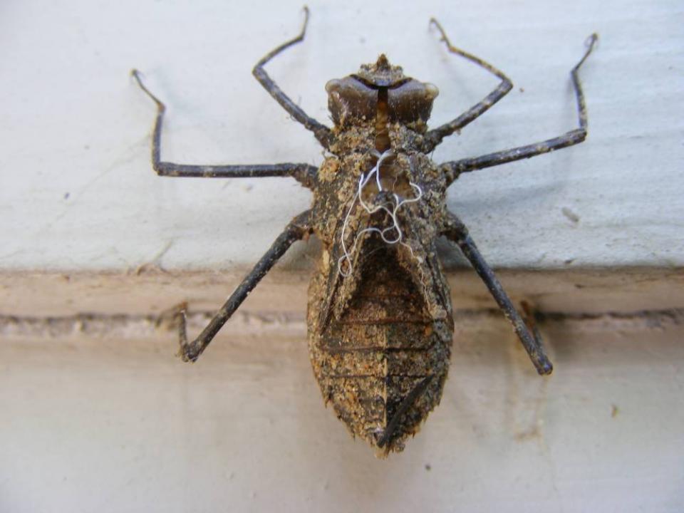 Insect Exoskeleton Shutterbug