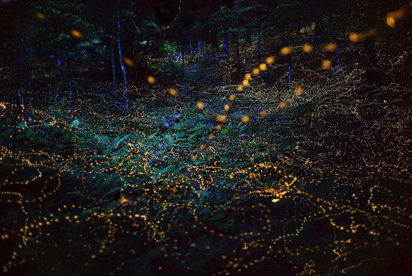 How to use fireflies to light paint the landscape fantastic shutterbug to capture these winged insects painting the landscape fantastic these lightnin bugs also do their illuminating dance in the southern united states aloadofball Image collections