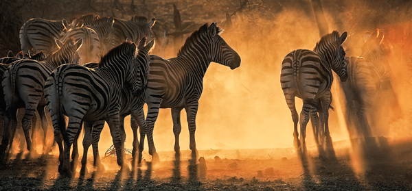 Look at These Amazing Winners of the Wonders of Wildlife Photography Competition