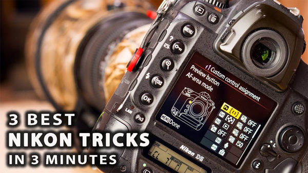 Camera Settings For Wedding Photography Nikon: These Are The 3 Best Camera Settings For Shooting Wildlife