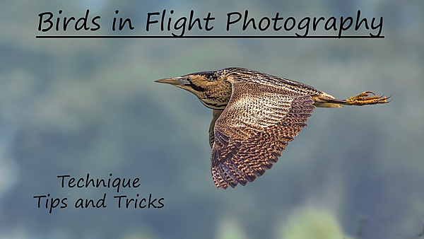 Capture Great Birds-in-Flight Photos with These Tips, Tricks & Techniques (VIDEO)