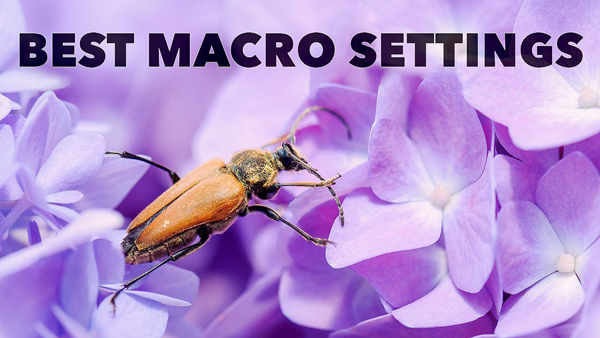 These Are the BEST Camera Settings for Macro & Close-Up Photography (VIDEO)