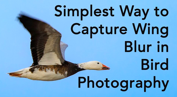 Shoot Better Bird Photos with This Simple Trick for Capturing Wing Blur (VIDEO)
