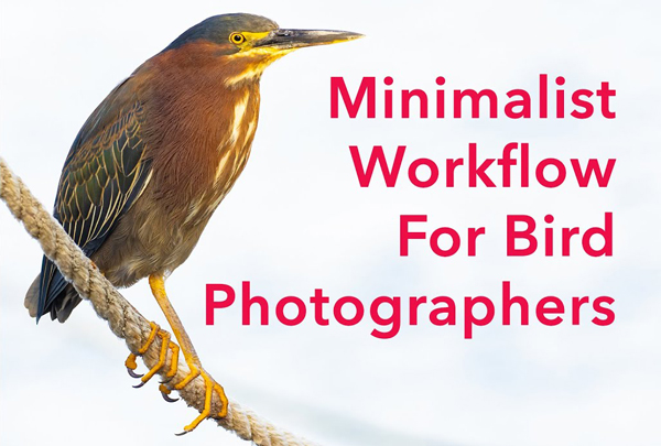 Try This Simple Workflow for Editing Bird Photos in Lightroom (VIDEO)