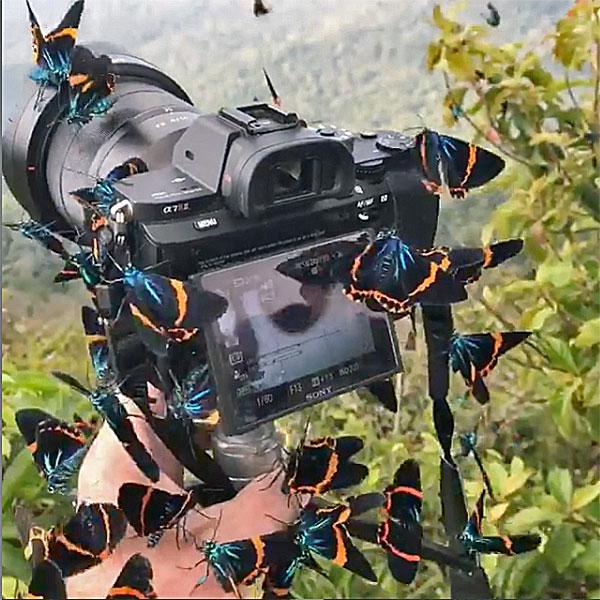 Beautiful Butterflies Envelope Photographer's Camera in Stunning Scene (VIDEO)