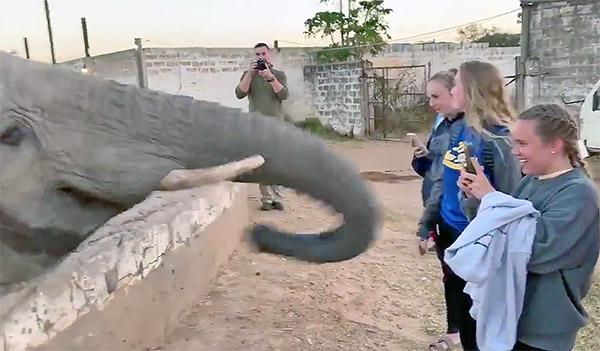 Watch This Camera-Shy Elephant Knock a Woman's Phone Out of Her Hand with Its Trunk