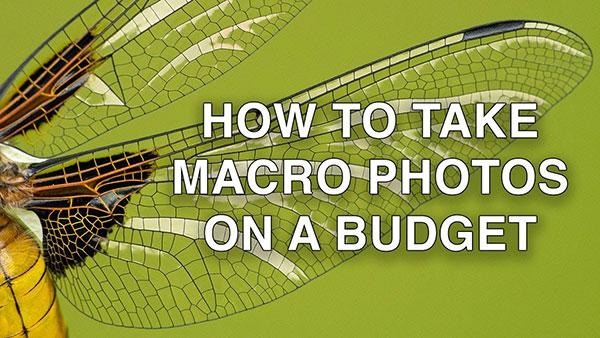 Here's How to Take Great Macro Photos on a Budget (VIDEO)