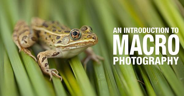 Here's a Great Introduction to the Basics of Macro Photography (VIDEO)