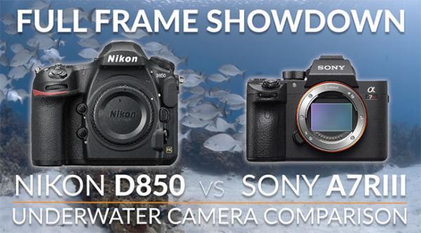 Nikon D850 vs Sony A7R III Full Frame Camera Underwater Shootout (VIDEO)
