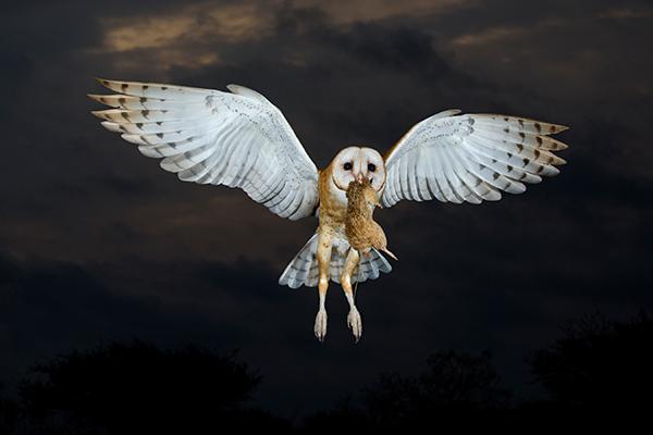 Alan Murphy's 4 Practical Tips for Better Bird Photography