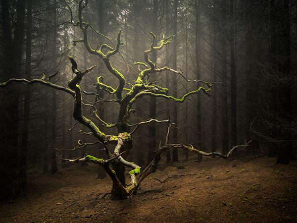 Into the Woods: How Photographer Simon Baxter Captures His Moody Images of Nature