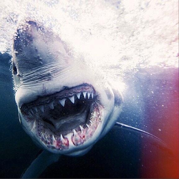 Best Instagram Photographer To Follow During Shark Week