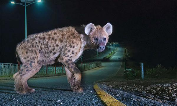 Here's How to Capture Eye-Popping Wildlife Photos Right in Your Own Town or City (VIDEO)