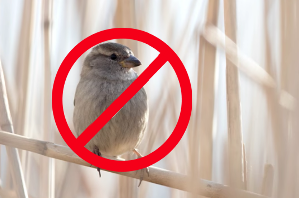 Take Great Wildlife Photographs by NOT Making These Image-Killing Mistakes (VIDEO)