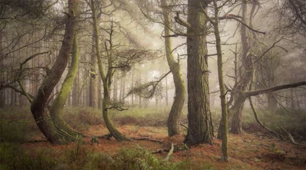Nature Photographer Simon Baxter Says Composition, Patience & Perseverance Win the Day (VIDEO)