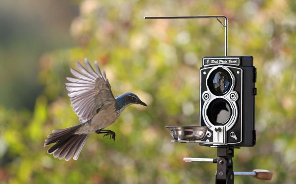Bird Photo Booth 2.0 May Look like a Vintage Rollei, but It's Actually a Birdfeeder with a 4K Action Cam