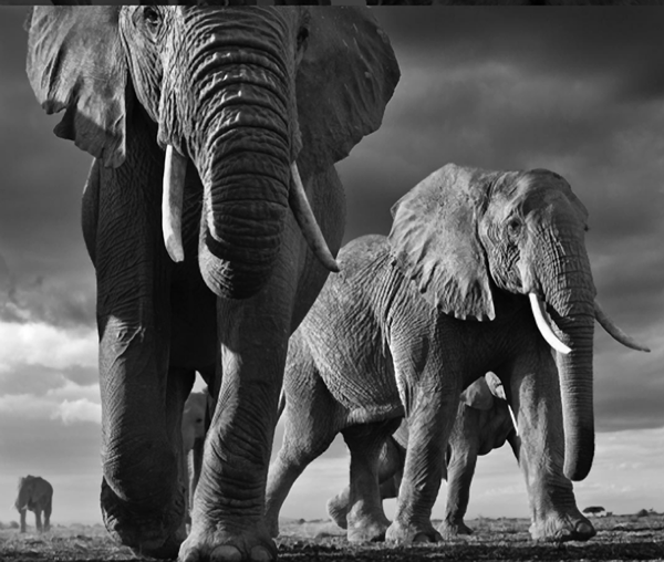 Photographer Captures Breathtaking B&W Images to Bring Attention to Earth's Vanishing Wildlife