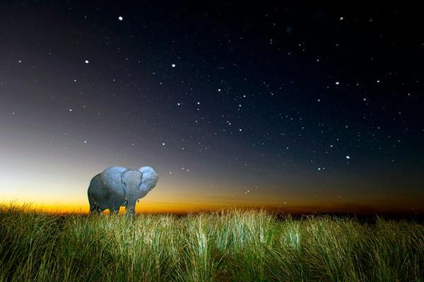 Nature Photographer Captures Stunning Images of African Wildlife at Night Under Moonlit Skies
