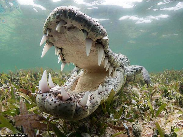 """These Underwater Images of Crocodiles by Chris Knight Are Literally """"Jaw Dropping"""""""