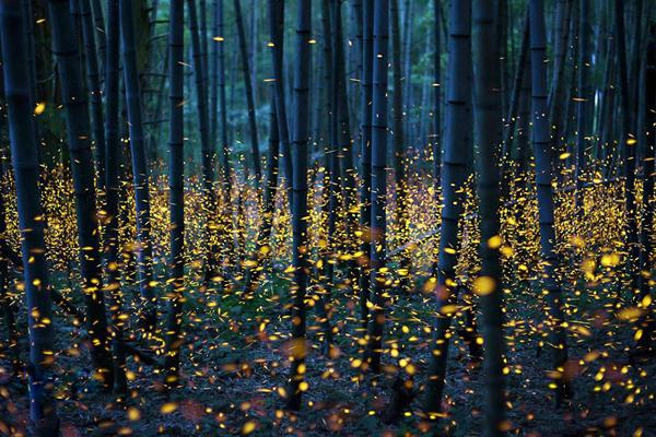 How to use fireflies to light paint the landscape fantastic shutterbug how to use fireflies to light paint the landscape fantastic aloadofball Image collections