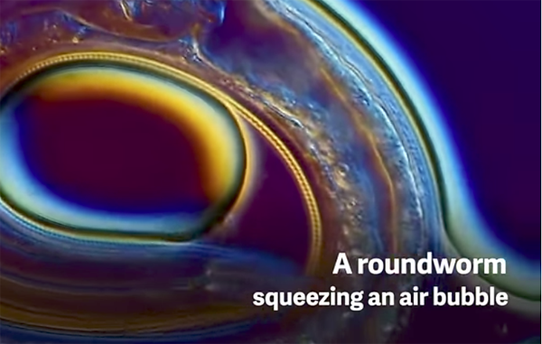 These Amazing Short Video Clips Were Shot Through a Microscope for Nikon's Small World in Motion Contest