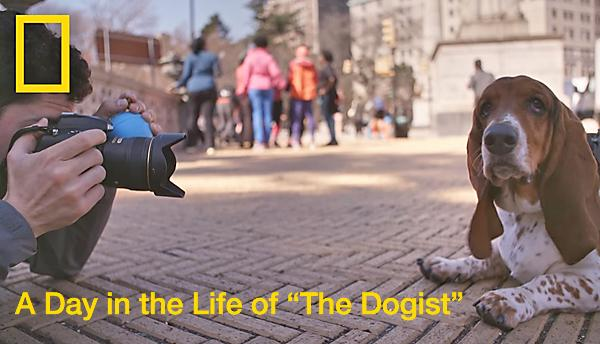 Celebrate National Puppy Day with This Nat Geo Video of a