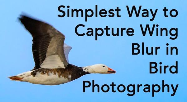 shoot better bird photos with this simple trick for capturing wing