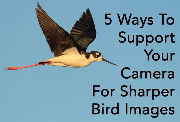 Here Are 5 Tricks for Tack Sharp Bird Photographs While Hand-Holding Your Camera (VIDEO)