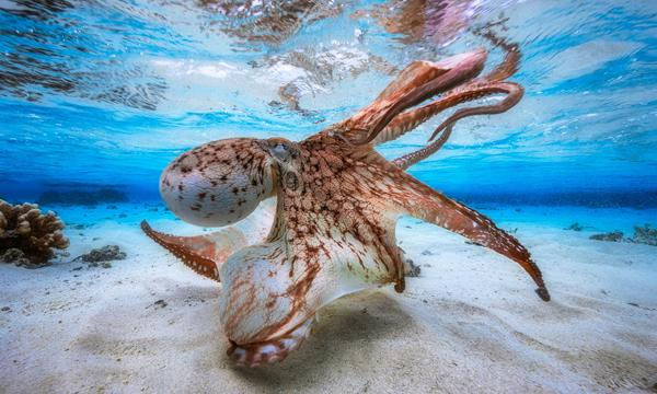 Here Are the Amazing Winners of the 2017 Underwater Photographer of the Year Contest