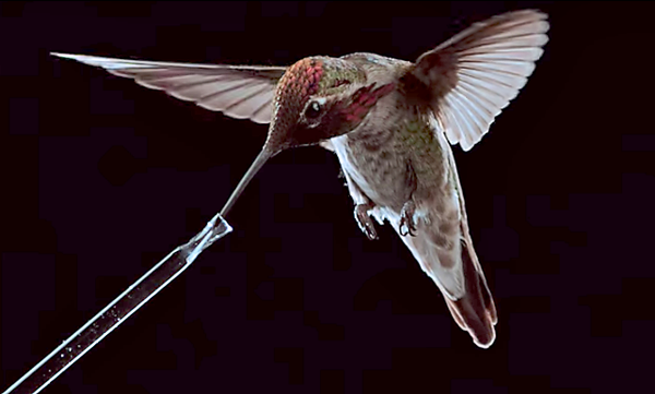 Watch How Hummingbirds Fly, Feed and Hover in This Amazing Slow-Motion Video from Nat Geo