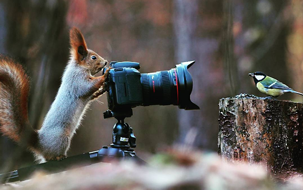 "Wildlife Photographer Captures Images of Cute Squirrels ""Taking Pictures"" & Playing in the Snow"