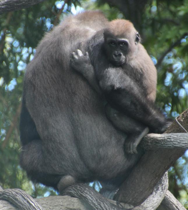 Bronx Zoo Shutterbug