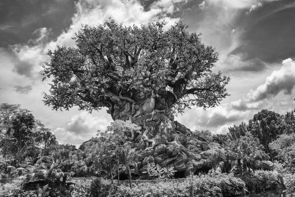Animal Kingdom Tree Of Life Shutterbug