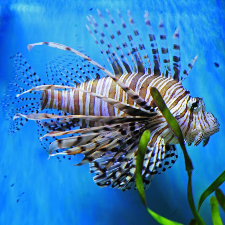 Tropical fish passionx for Exotic fish stores near me