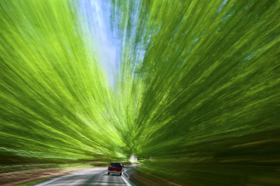 tunnel of trees shutterbug